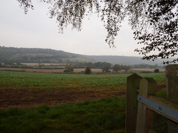 View to North Downs from just below Deerleap Barrow